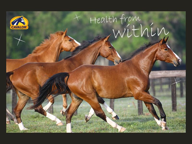 detox paard cavalor